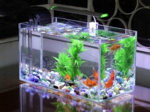 Máy bơm tạo tính thẩm mĩ cao cho bể cá