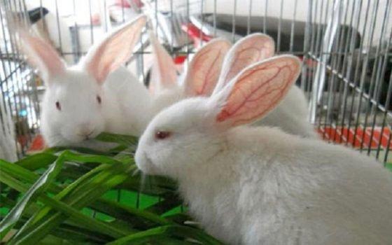 Tìm hiểu thông tin về thỏ