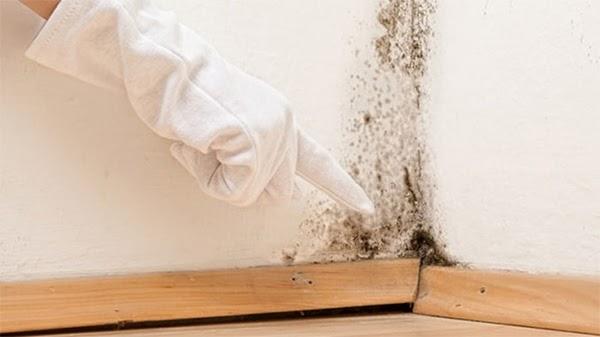 Nguyên nhân gây ẩm mốc trong phòng ngủ