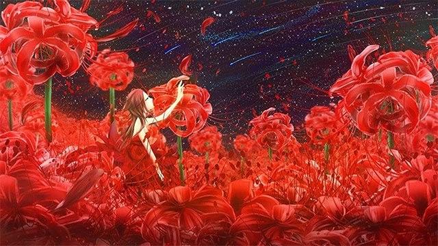 Một số hình nền hoa bỉ ngạn 3D đẹp