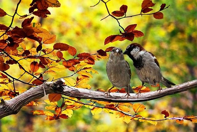 Dấu hiệu của bắt đầu mùa thu