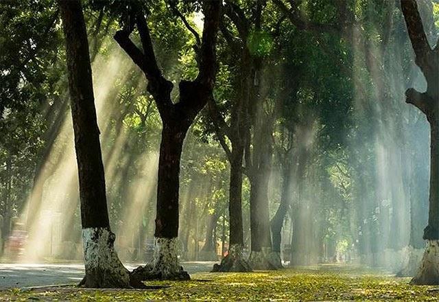 Mùa thu trên con đường Phan Đình Phùng
